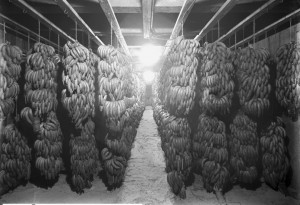 A banana storage room in Salt Lake City in 1913.