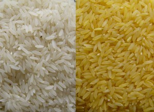 White and Golden Rice Respectively