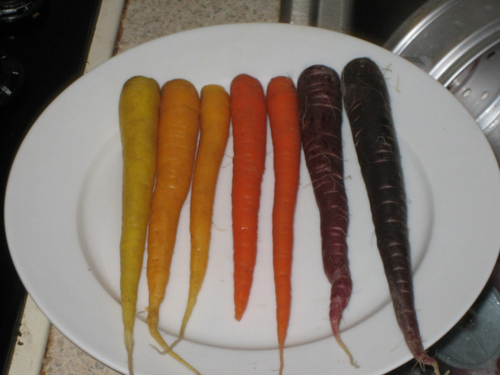 Carrots from pale yellow to black