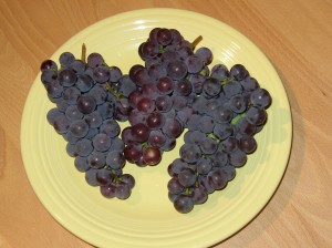 New York Grapes. Concords I believe, though it's been several years so I may be remembering wrong.