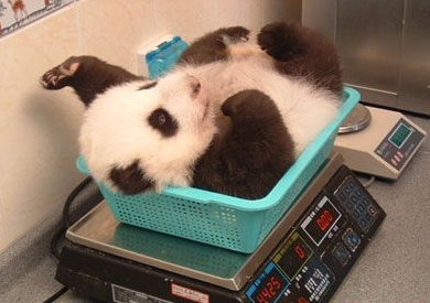 Can you imagine how much easier it would be to get funding if you too worked on panda biology?