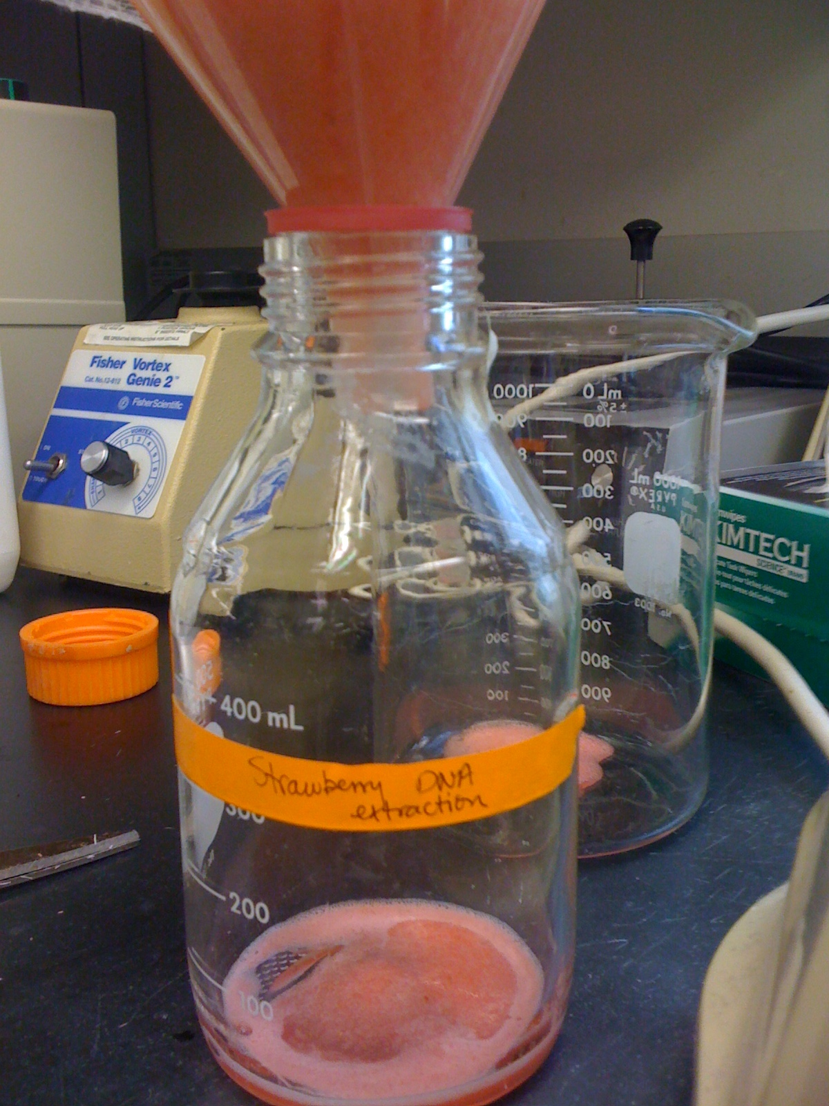 strawberry dna extraction lab report